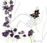 Skunk lily or Love, Curse