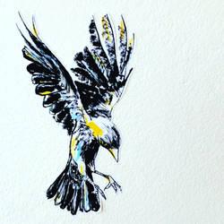 Bird merle