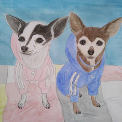 Chihuahuas by BellaZarah