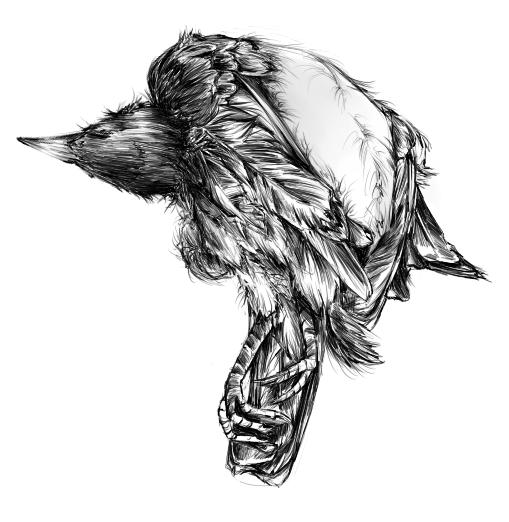 Crow by fairyn