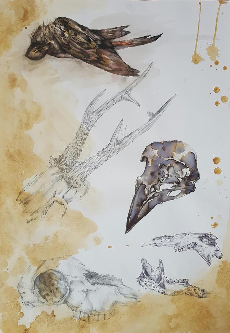 Dead bird and bone study 1 by fairyn