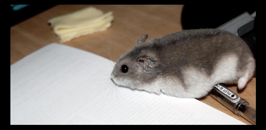 My hamster ate my homework poem