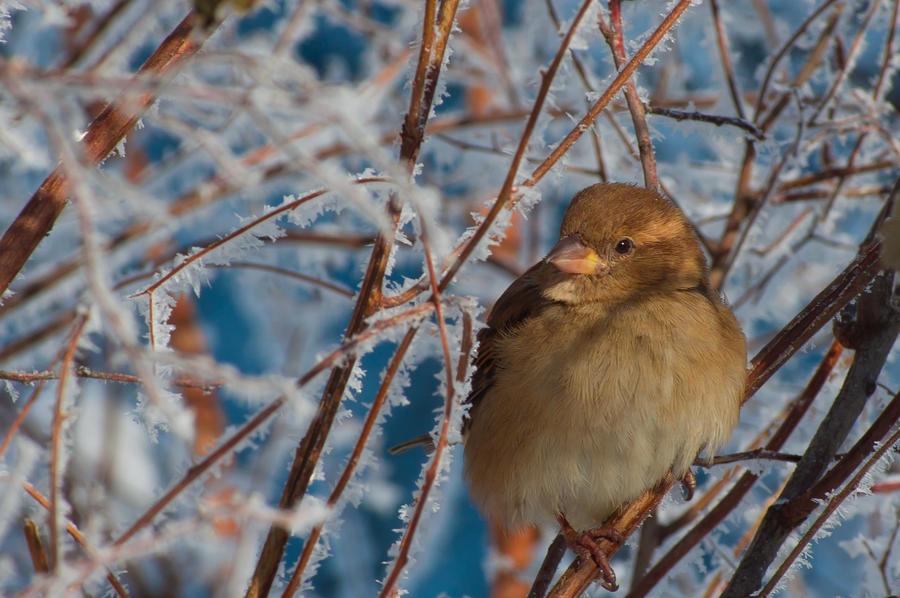 Sparrow by Lightseekr