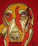 Red Labrador