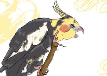 Old Man Cockatiel by keprydak