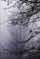 fog by Bokor