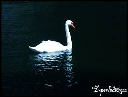 Swan by Imperfection22
