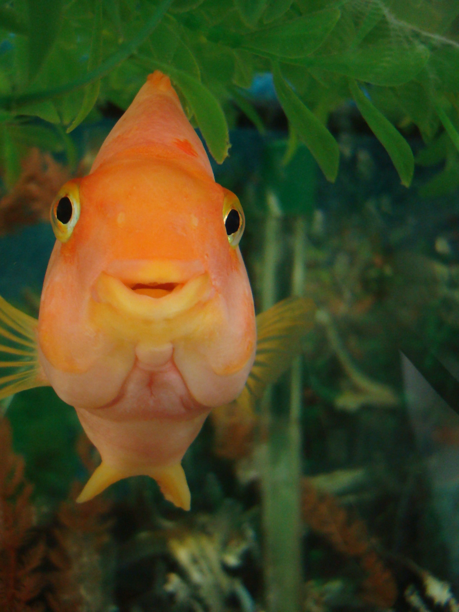 [Image: Smiling_Fish_by_sunriseskies.jpg]