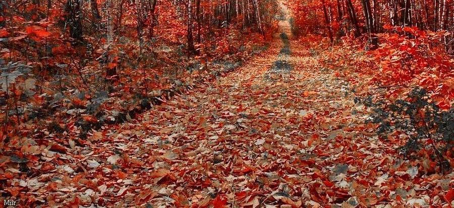 Scarlet trail by miirex