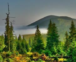 Romanka in the fog - 1366 m n.p.m by miirex