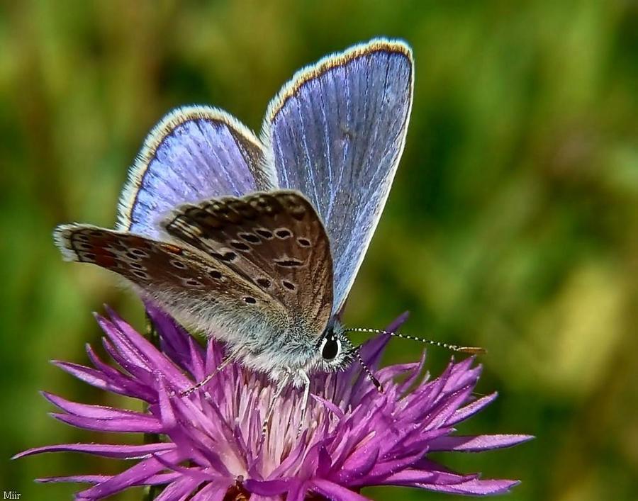 Butterfly by miirex