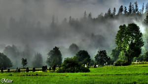 Morning fog by miirex