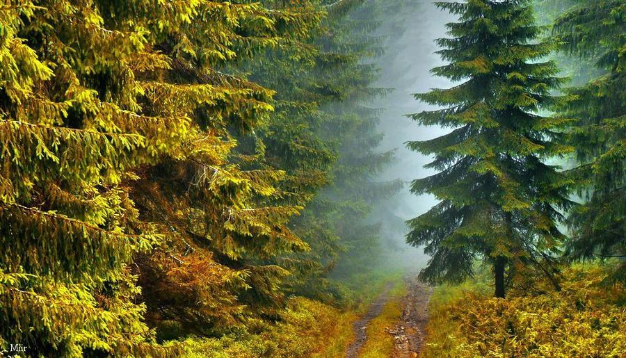 Autumn Gate by miirex