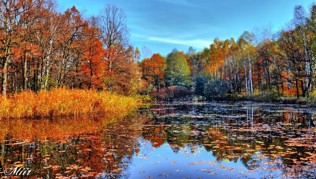 Autumn pond by miirex