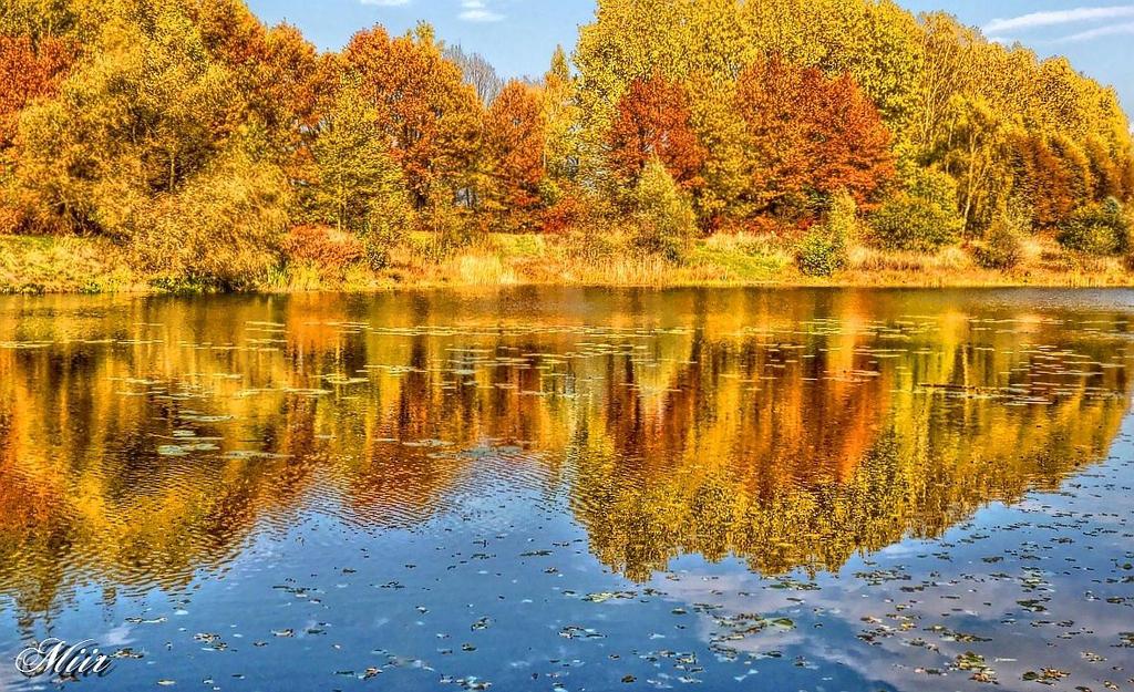 Autumn on the pond by miirex