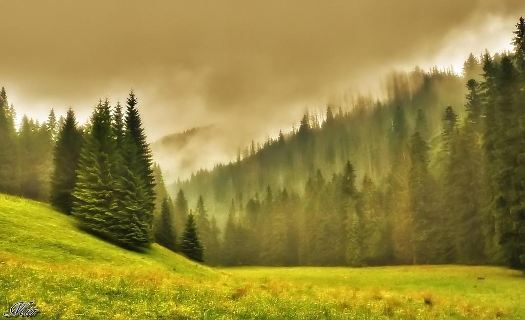 Forest secrets by miirex