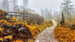 Autumn trail by miirex