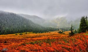 Mountains valley - Hala Kondratowa