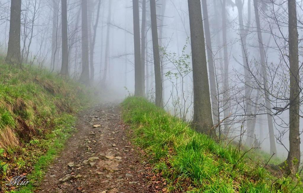 Misty, Poland Spring. by miirex