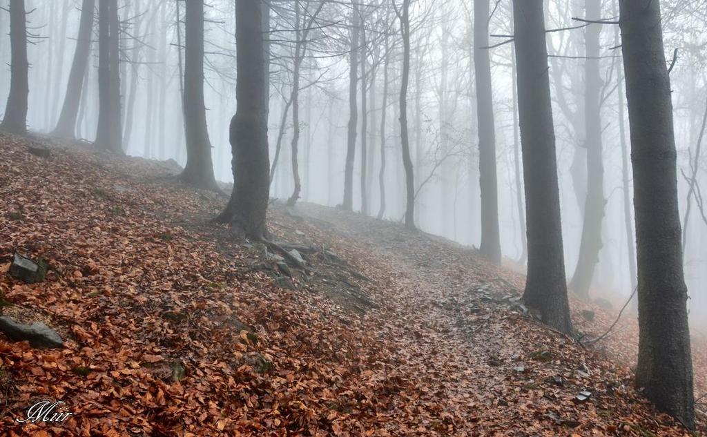 Misty, Poland Spring by miirex