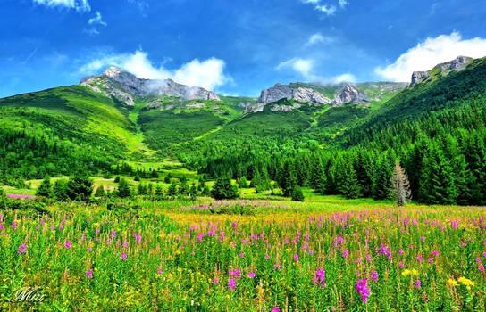 Mountain valley.