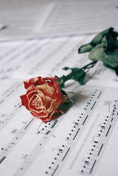 :: beautiful melody :: by maskqueraide
