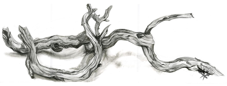Branching by Tiirabird