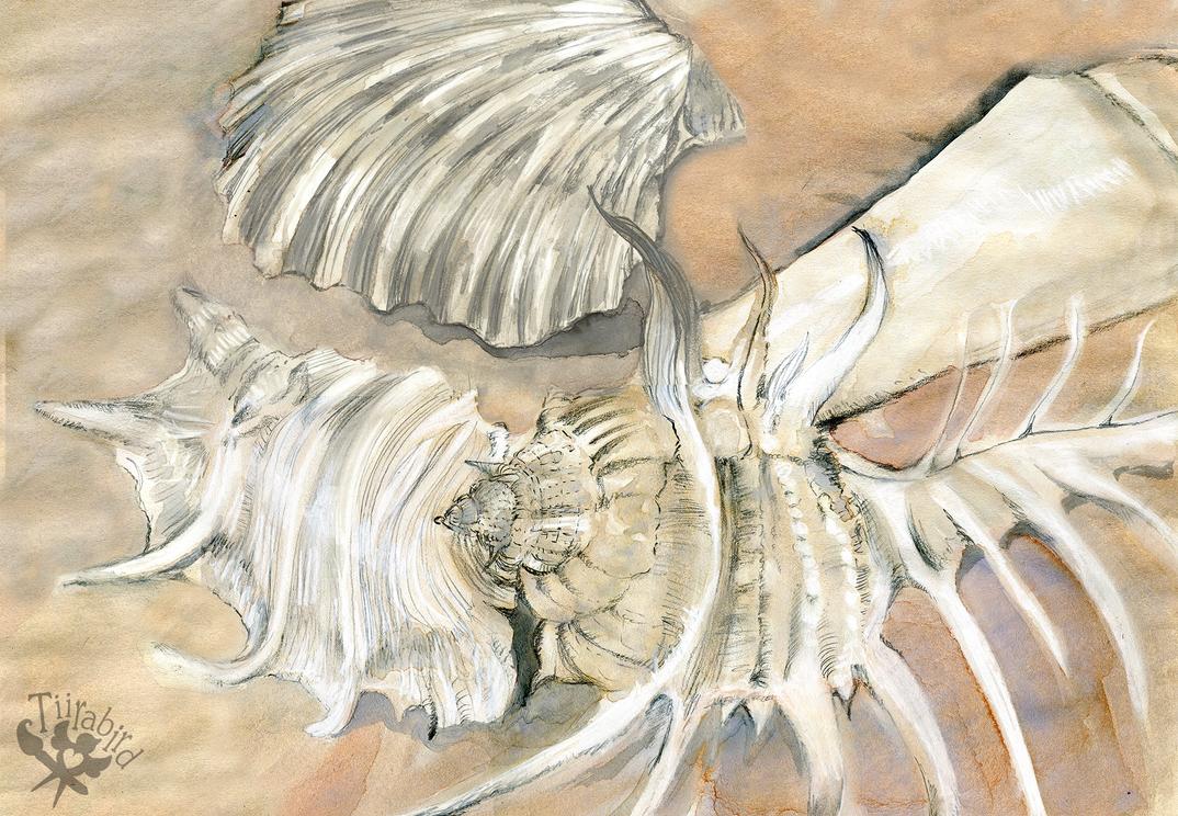 Sea Shelling by Tiirabird