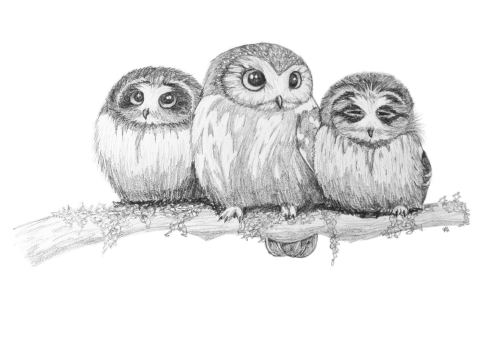 Cute owls by VMHamel