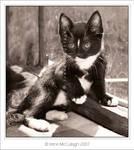 Kitten Kalli