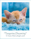 Tangerine Dreaming