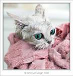 Wet + Disgruntled Kitty