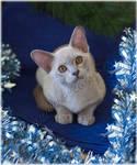 Burmese Christmas Kitten