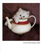 Teapot Chinchilla