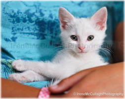White kitten at rescue shelter by substar