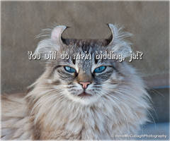 Kitty Hypnotist by substar