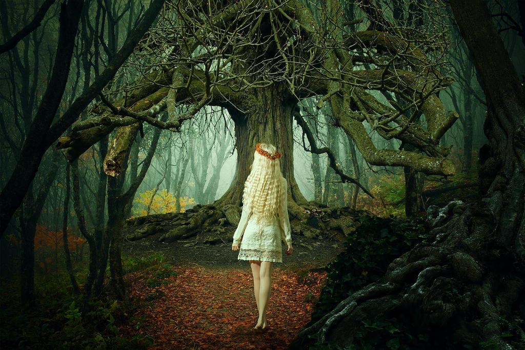 The Elder Tree by paulojbarbosa