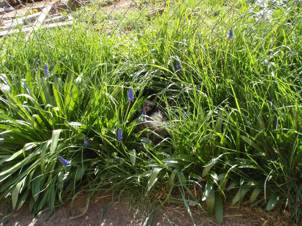 Spring Camouflage by Missminxtress