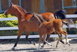 horse stock 3