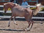 horse stock 6