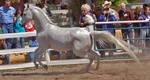 horse stock 15