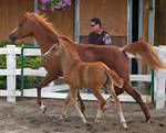 mare and foal stock 1