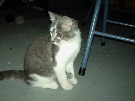 blazer kitten by trogdor324
