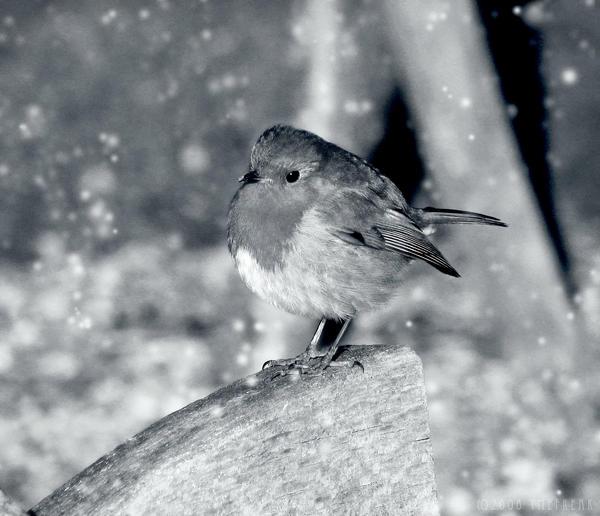 Robin by ymefreak