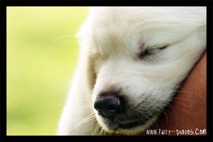 Canine Catnap by furryphotos