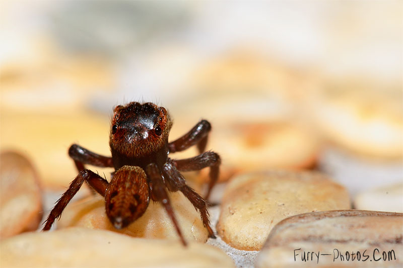 The Shy Spider by furryphotos