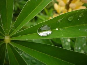 Rain drop on leaf II