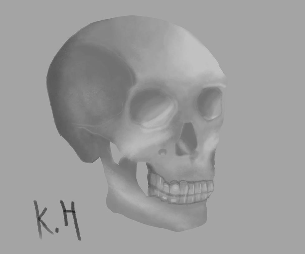 Human basic Skull by KazuukiHasegawa