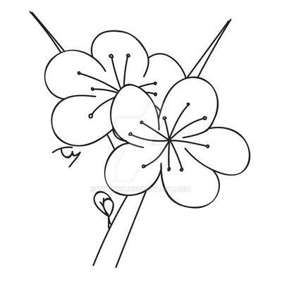 how to draw a cherry blossom tree