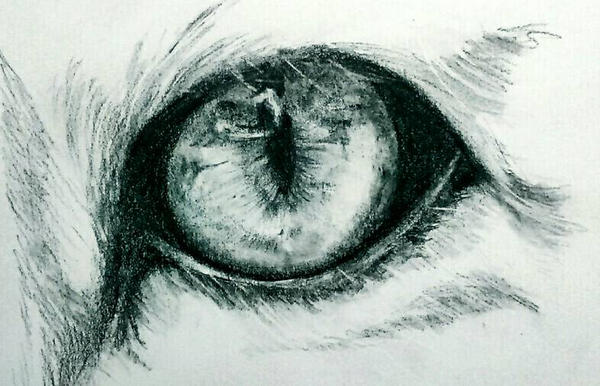 tiger eye  by Haitam-arts